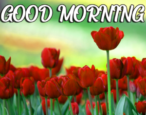 Beautiful Good Morning Pics With Flower