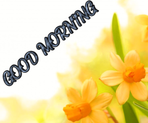 Beautiful Good Morning Images Pics Download