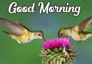 Beautiful Good Morning Images Photo Wallpaper pics Download
