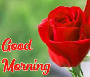 Beautiful Good Morning Pics With Red ROSE