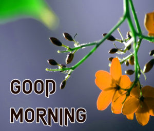 Sister Good Morning Images wallpaper download
