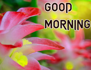 Sister Good Morning Images picture for friend