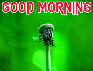 Sister Good Morning Images wallpaper photo for friend