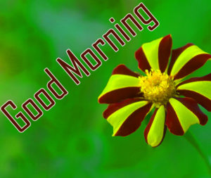 Sister Good Morning Images photo download