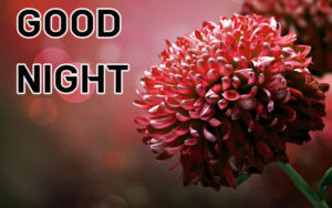 Good Night Images wallpaper picture photo download