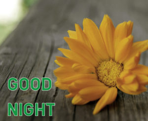 Good Night Images picture photo for girlfriend