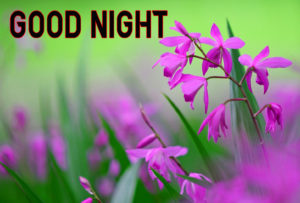 Good Night Images wallpaper photo picture for friend