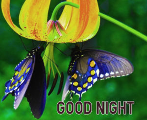 Good Night Images photo pics with butterfly