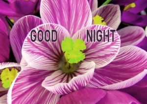 Good Night Images wallpaper pics for best friend