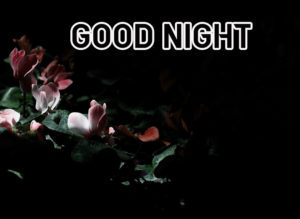Good Night Images photo pics picture download