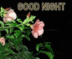 Good Night Images picture photo for facebook