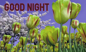 Good Night Images picture pics downloads