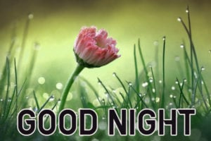 Good Night Images wallpaper photo download