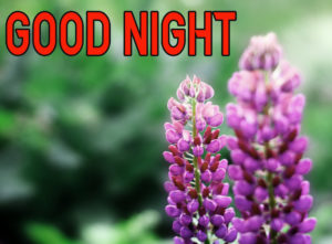 Good Night Images photo picture for best friend