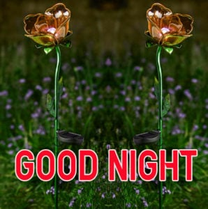 Good Night Images photo picture for whatsapp