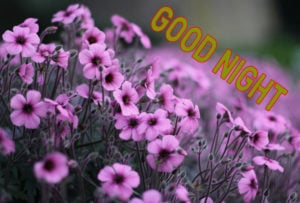 Good Night Images picture photo download