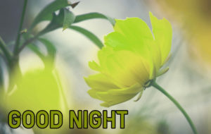 Good Night Images wallpaper photo for friend