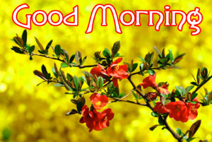 Very Nice Good Morning HD Images picture photo download