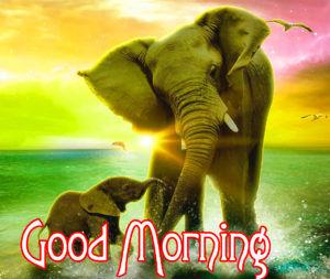 Very Nice Good Morning HD Images picture photo for best friend