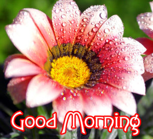 Very Nice Good Morning HD Images photo picture for whatsapp
