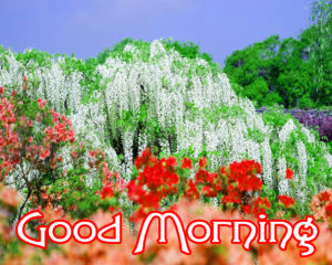 Very Nice Good Morning HD Images photo pics downloads