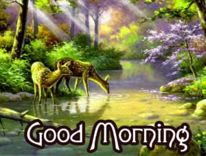 Very Nice Good Morning HD Images wallpaper pics download