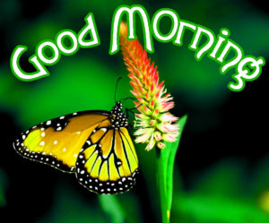 Very Nice Good Morning HD Images photo pics download