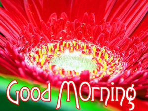 Very Nice Good Morning HD Images wallpaper