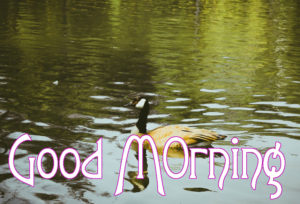 Very Nice Good Morning HD Images photo for whastapp