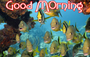 Very Nice Good Morning HD Images wallpaper for facebook