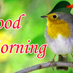 Top 1256+ HD Good Morning Wallpaper Images Download For Girlfriend