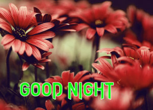 Good Night Images pics with flower