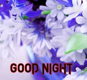 Good Night Images photo pics picture for friend