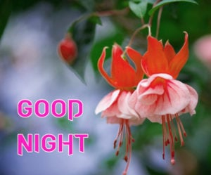 Good Night Images photo pics for friend