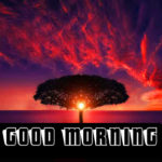Top 562+ Good Morning Images Free Download For Whatsapp HD Download