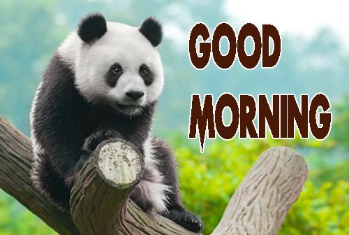 Animal Good Morning Images Photo HD