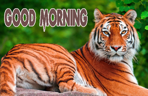 Animal Good Morning Pics Wallpaper Download