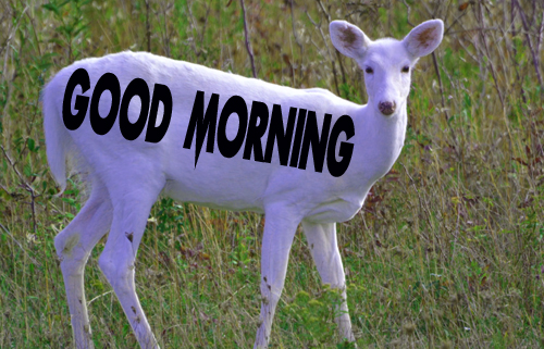 Animal Good Morning Pics pictures Download
