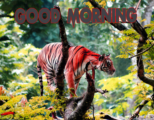 Animal Good Morning Wallpaper Download