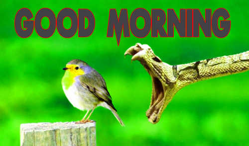Animal Good Morning Images Photo Download