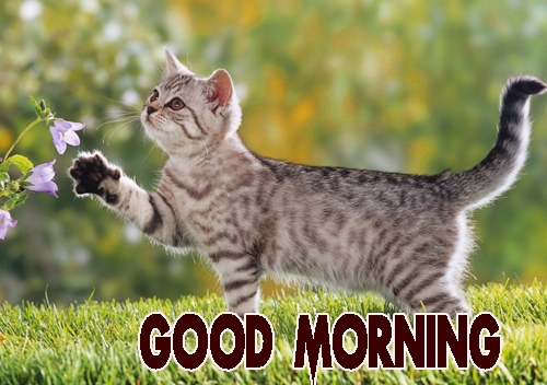 Animal Good Morning Wallpaper Pic Download