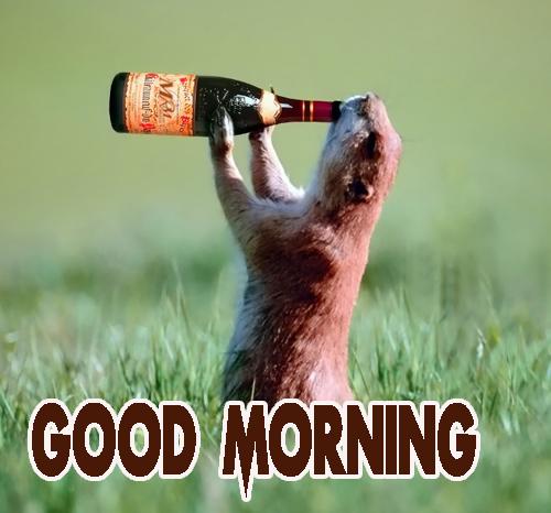 Animal Good Morning Images