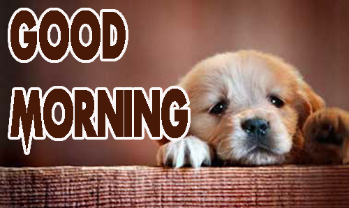 Animal Good Morning Images Pics HD