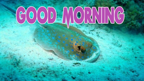 Animal Good Morning photo Wallpaper Download