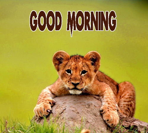 Animal Good Morning Pics pictures Free Download