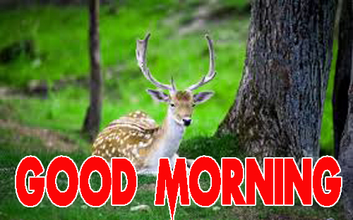 Animal Good Morning Wallpaper pics for Whatsapp