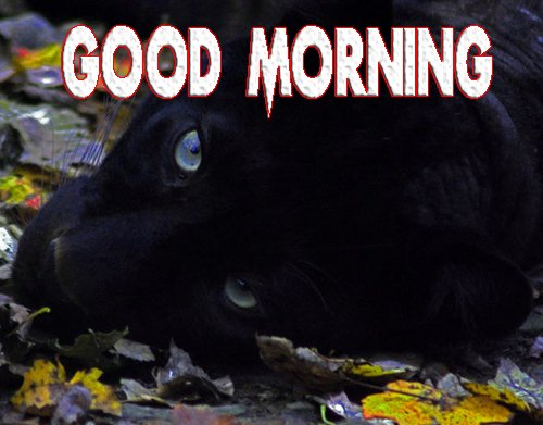 Animal Good Morning Pics Photo for Facebook