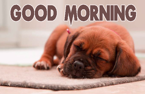 Animal Good Morning Wallpaper Pics Download