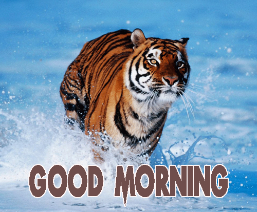 Animal Good Morning Photo Wallpaper free Download