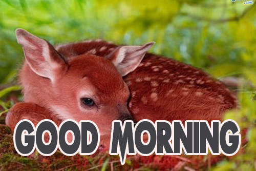 Animal Good Morning Photo pics Download